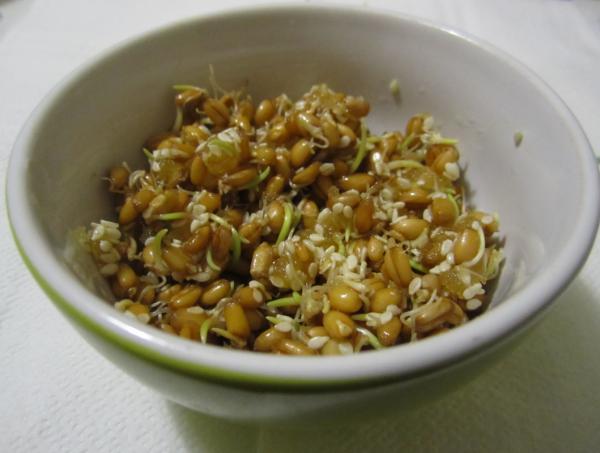 проростки салат с медом
